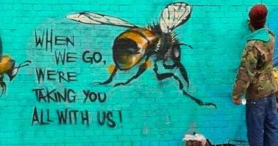 Hoe belangrijk zijn bijen en wat zou er gebeuren als…